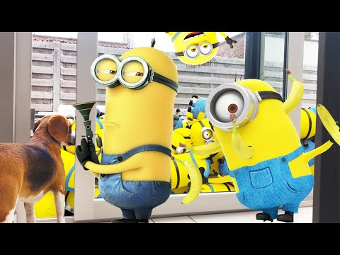 Minions: The Rise of Gru' trailer: Follow Kevin, Stuart, Bob and ... | 360x480