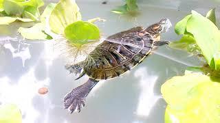 Nhà mới của rùa