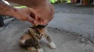 Jak dezaktywować nadaktywnego kociaka/ How to deactivate a Cat