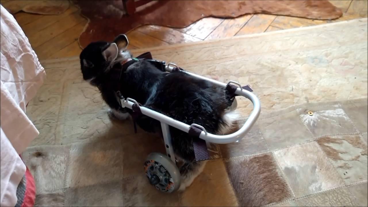 Легкая инвалидная коляска 7018A0603SP/T - YouTube