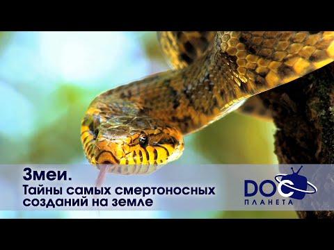 Змеи  - Тайны самых смертоносных созданий на земле  - Документальный фильм - Видео онлайн