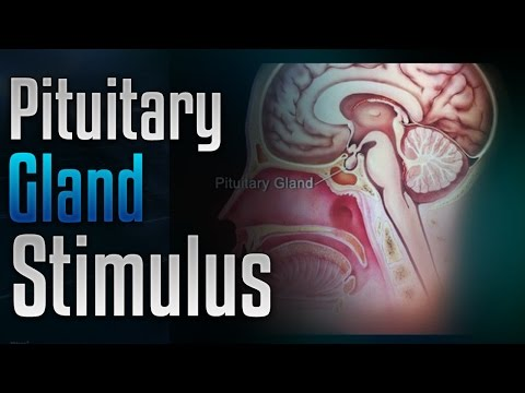 🎧 Pituitary Gland Stimulation to Release Growth Hormone with Simply Hypnotic