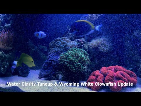 SCA 120 Gallon Reef | Ep.26 | Water Clarity Tune-Up & Wyoming White Clownfish Update