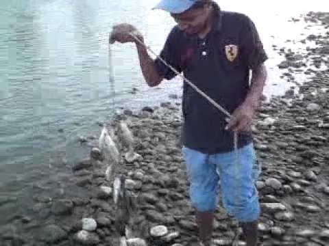 Pesca de tilapia en el r o moctezuma youtube for Construccion de estanques para tilapia