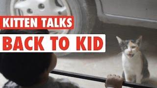 Kitten and Toddler Talk - So Cute!