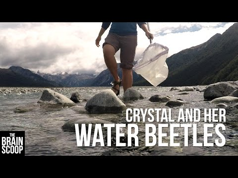 Crystal and her Water Beetles