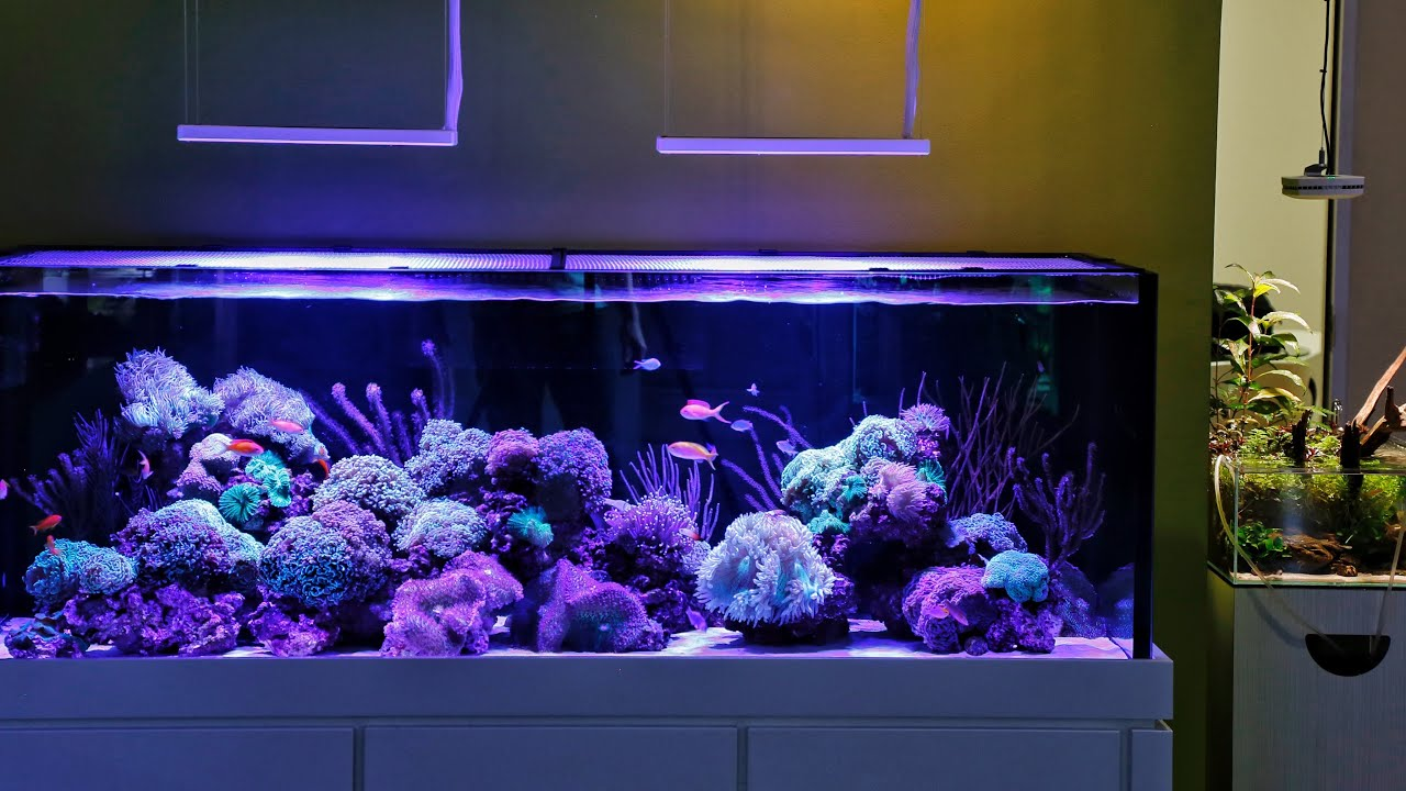 My Favourite Reef Aquascape I Want One Youtube