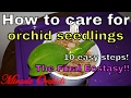 How to care for orchid seedlings in 10 easy steps | The final Ecstasy!