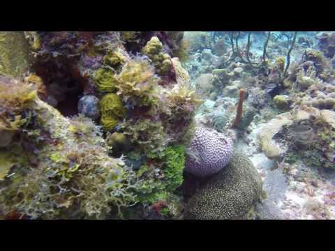Diving Jamaica 2015