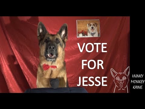 Kaine's Speech Vote for Jesse the Jack Russell Terrier *VOTING CLOSED*