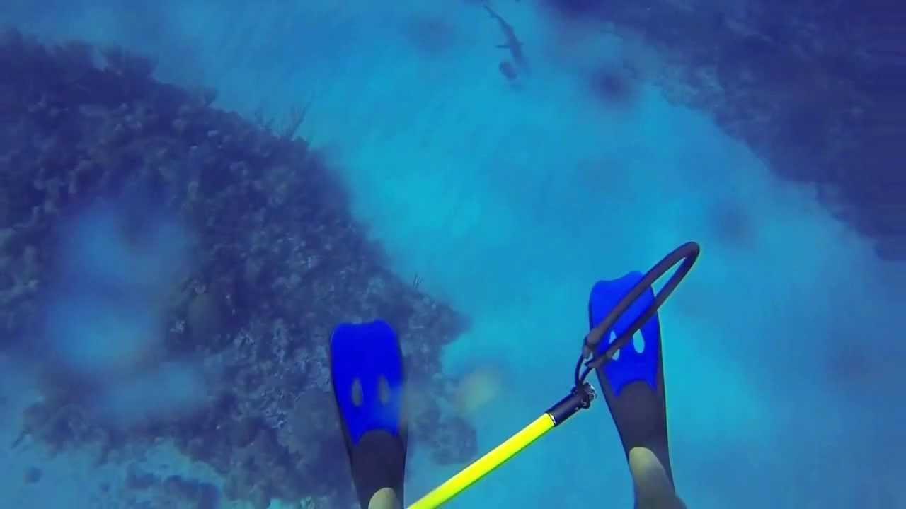 Image Result For Shark Attacks Cayman Islands