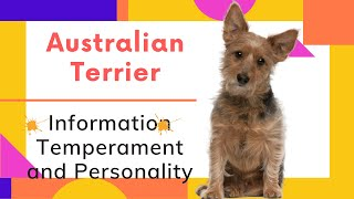 dogs: Australian Terrier Breed Information And Personality