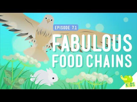 fabulous-food-chains:-crash-course-kids-#7.1