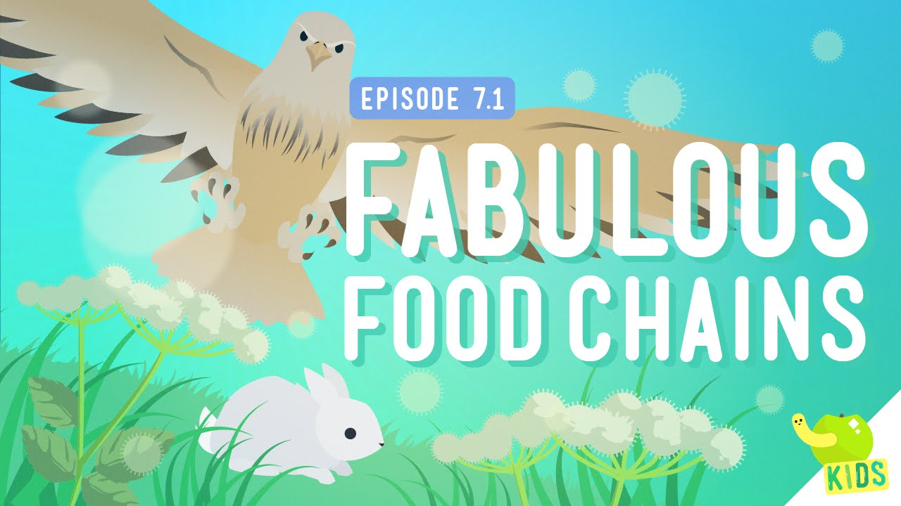 medium resolution of Food chains   TheSchoolRun
