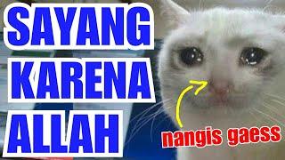 MASYAALLAH: SAYANG KUCING PADA ANAK ANJING | Kisah Persahabatan antara Kucing & Anjing.