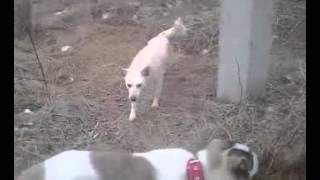 Дорога домой    дворовые собаки