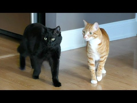 Moving with Cats - Funny Compilation!
