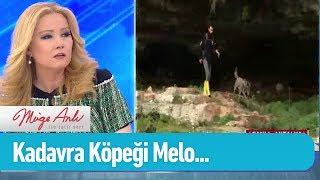 Arama çalışmalarına kadavra köpeği Melo da katılıyor - Müge Anlı ile Tatlı Sert 25 Şubat 2019
