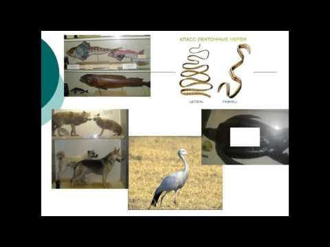 """Учебный фильм по биологии в 7 классе """"Тип Круглые черви""""из YouTube · Длительность: 3 мин20 с  · Просмотры: более 24000 · отправлено: 18/06/2013 · кем отправлено: Образовательный канал"""
