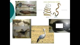 презентация по биологии 7 класс покровы тела