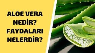 Aloe Vera Nedir? Ne İşe Yarar? Neye İyi Gelir? Faydaları Nedir? Nasıl Kullanılır?