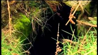 Ray Mears' Bushcraft S02E05 - Four Seasons