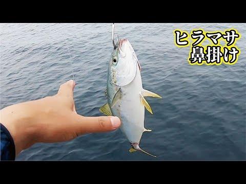 禁断のヒラマサの泳がせ釣り中怒涛の獲物パニック