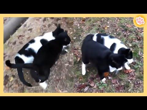 Inseparable Cat Couple💗True love💗Cute Pets video #5 | Pawfiterole