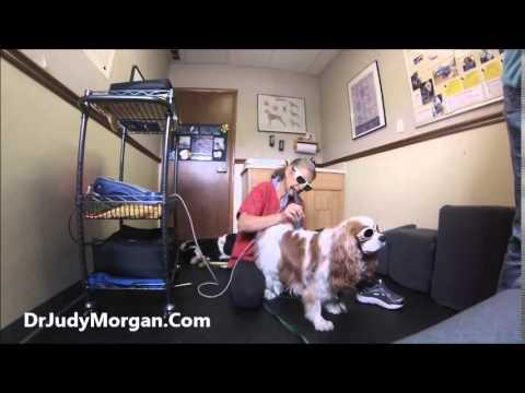 Dog Laser Treatment Youtube