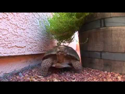So You Want To Adopt A Tortoise?! TortoiseGroup Org