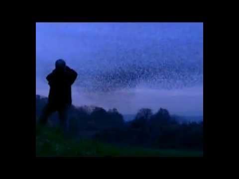 Starling Magic