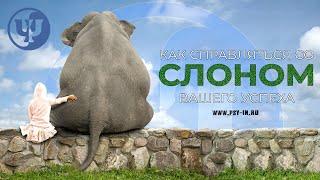 Как справляться со слоном вашего успеха. Ковалев С.В.