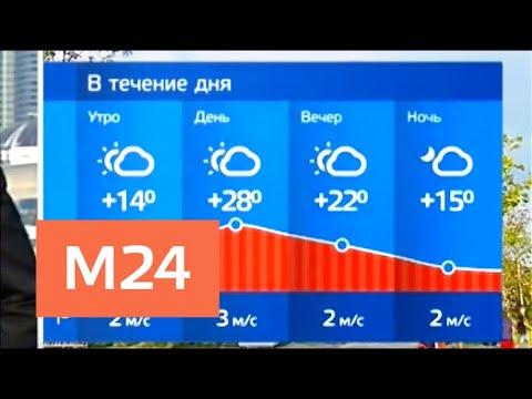 """""""Утро"""": в Москве установилась аномально теплая погода - Москва 24"""
