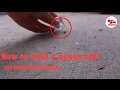 How To Catch A Queen Ant 150 SUBSCRIBER SPECIAL