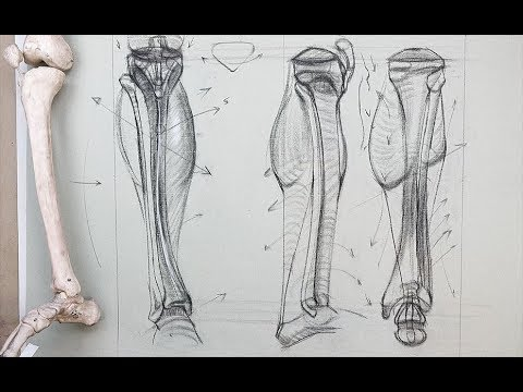 ANATOMY FOR ARTISTS: Bones of the Lower Leg-Tibia and Fibula