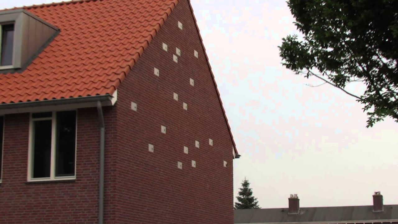 House Sparrows Nesting In Swift Nest Bricks Youtube