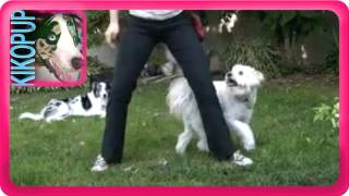 Dog Trick Training Tutorial: Weaving Though Legs