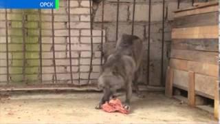 Сколько волка ни корми 24 10 13