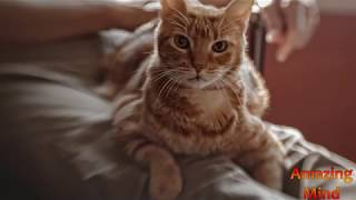 Почему кошка ТОПЧЕТСЯ, перебирая лапками? (Взбивает перину?)