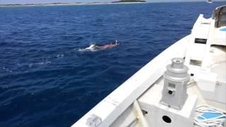 沖縄シュノーケル人魚.