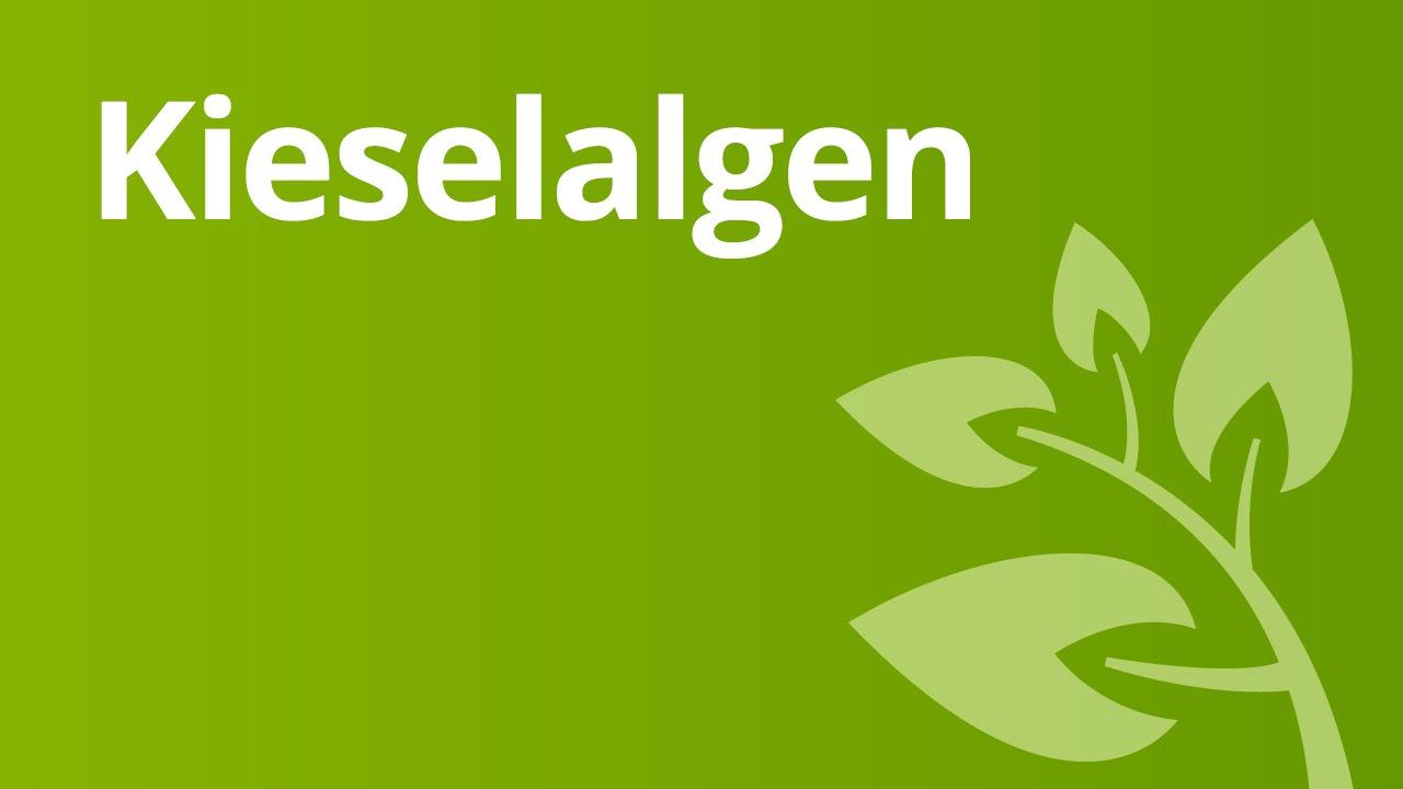 kieselalgen biologie biologie der pflanzen und pilze mittelstufe youtube. Black Bedroom Furniture Sets. Home Design Ideas