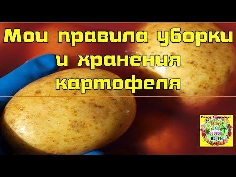 Мои правила уборки и хранения картофеля   картофеля_2018   подготовка   огороднику   урожайный   овощеводу   картофеля   горяченко   дачнику   уборка   советы