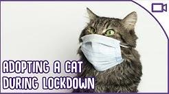 Adopting A Cat During Quarantine - TOP TIPS