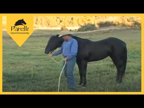 Parelli Natural Horse Training Tip - Pat Parelli Shows How To Lead A Horse