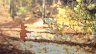 Autumn Leaves ~ Nat King Cole (HD) (HQ Audio) with lyrics