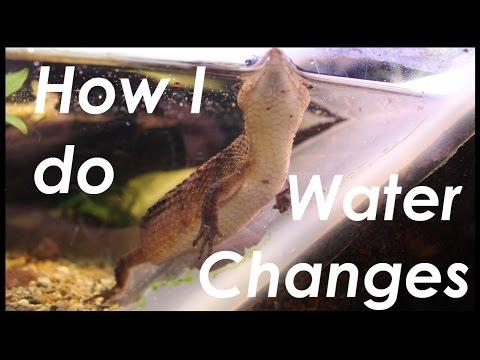 How do I do Water Changes? Sulawesi Water Skink Vivarium Maintenance
