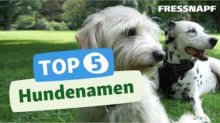 Top 5 Hundenamen
