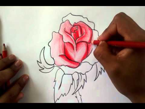 Como dibujar una rosa how to draw a rose youtube - Como secar una rosa ...