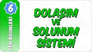 6. Sınıf Fen Bilimleri  Dolaşım ve Solunum Sistemi