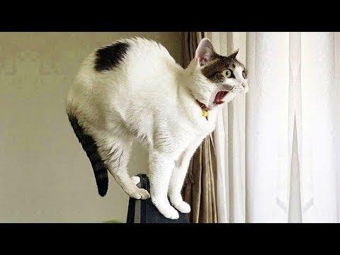 2019「絶対笑う」最高におもしろ犬,猫,動物のハプニング, 失敗画像集 #14